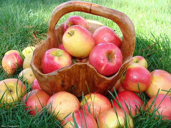 Тест на 1 минуту — в яблочко!