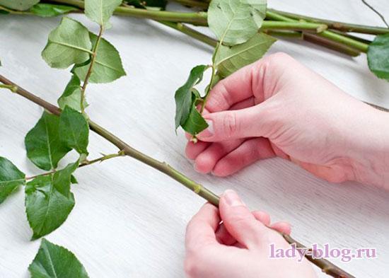 убрать нижние листья