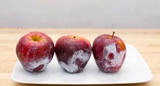 налет на яблоках